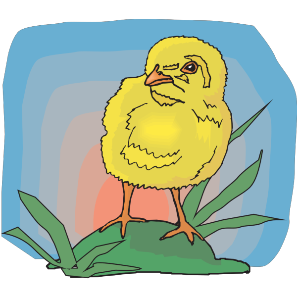 Baby Chick In The Sunset PNG images