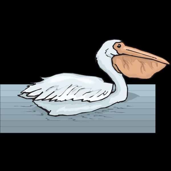 Swimming Pelican PNG Clip art