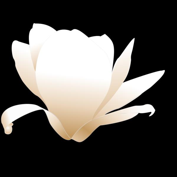 Magnolia-white PNG Clip art
