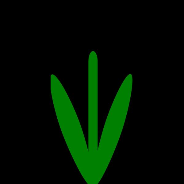 Stem PNG Clip art