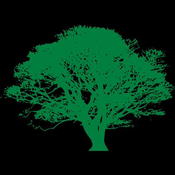 Ficus PNG Clip art