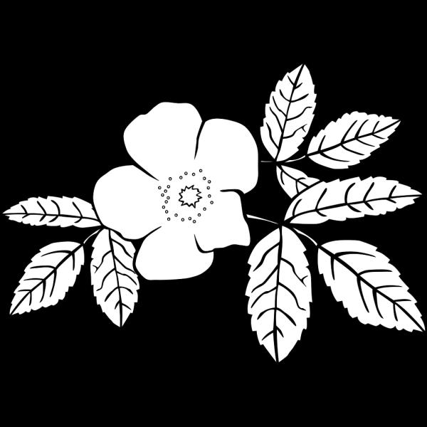 Gg Rosa Acicularis Outline PNG Clip art