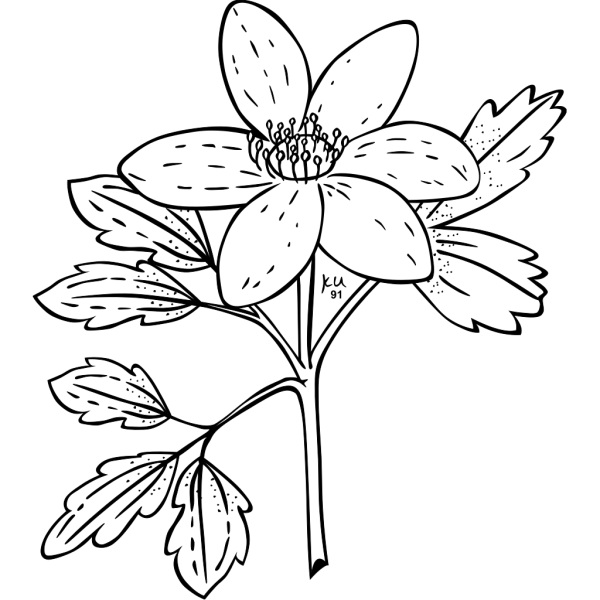 Ku Anemone Piperi Outline PNG Clip art