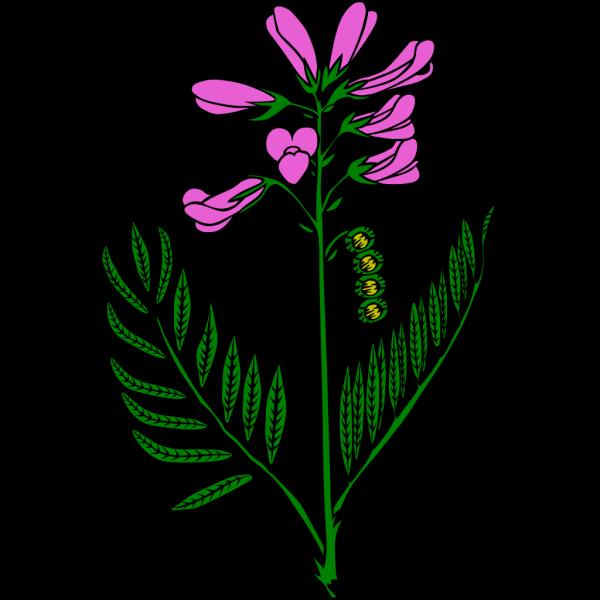 Purple Flower 3 PNG Clip art