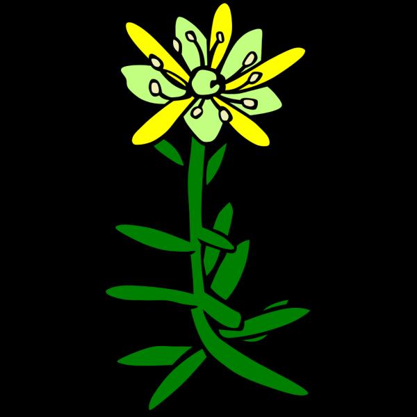 Gg Saxifraga Aizoides PNG Clip art