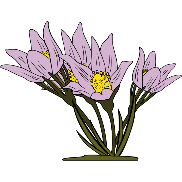 Anemone Patens 2 PNG images