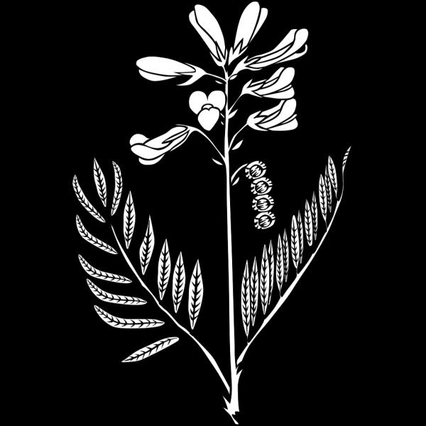 Ku Hedysarum Boreale Outline PNG Clip art