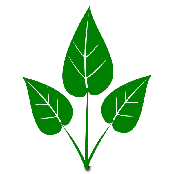 Floral Plant With Green Leaves PNG Clip art