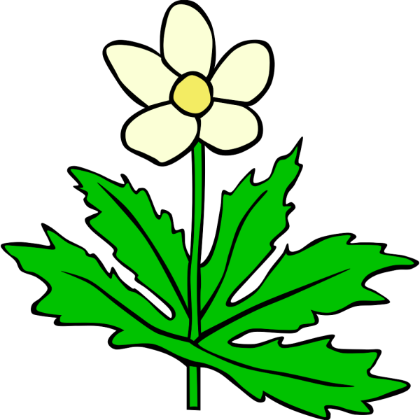 Anemone Canadensis Flower PNG images