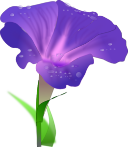Morning Glory Flowers PNG Clip art