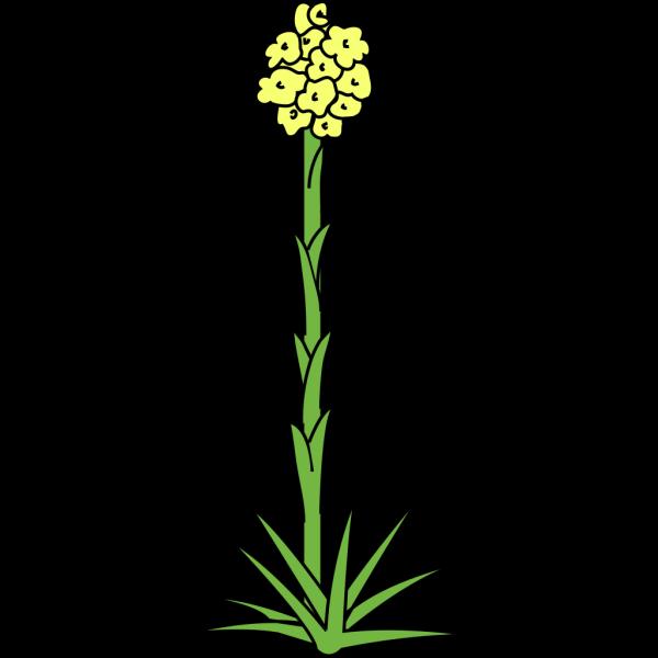 Field Daisy Plant Flower PNG Clip art