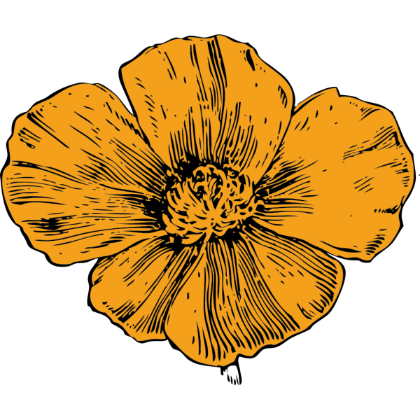 California Poppy PNG Clip art