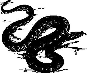 Anaconda PNG Clip art