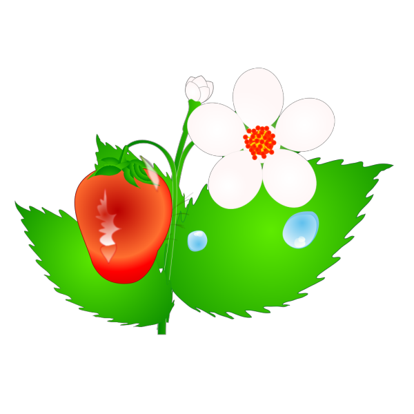 Strawberry Flower Jh PNG Clip art