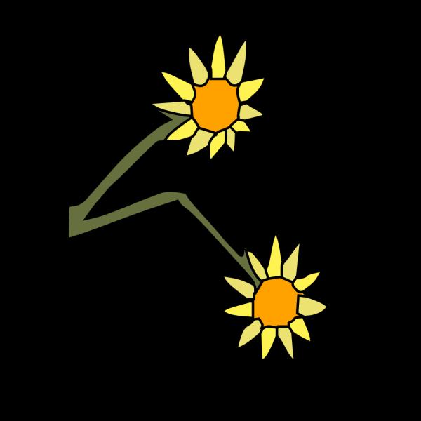 Sun Flowers PNG Clip art