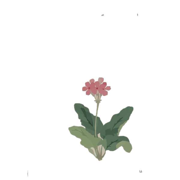 Sakura So PNG Clip art