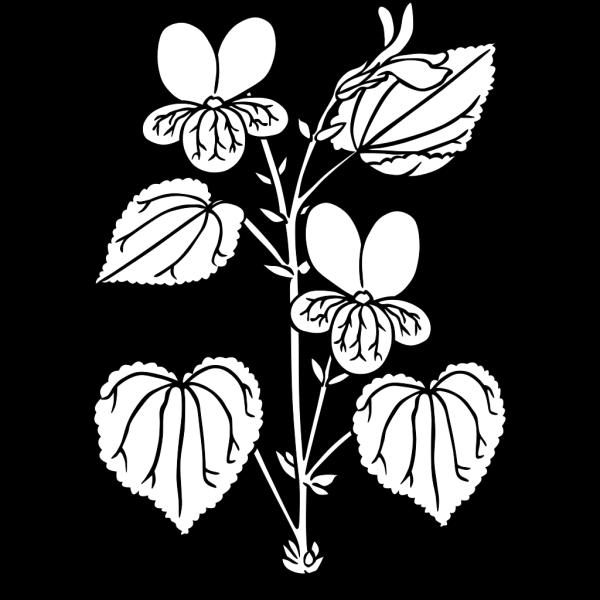 Viola Glabella Plant PNG Clip art
