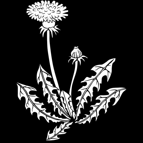 Dandelion Outline PNG Clip art