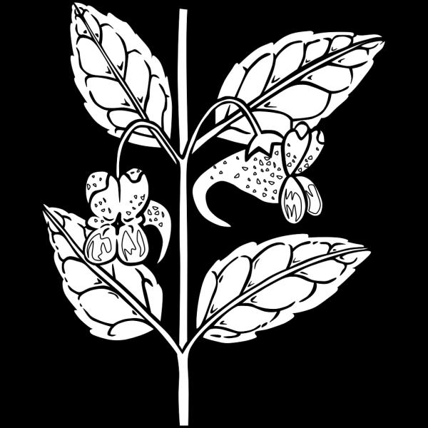 Impatiens Capensis Plant PNG Clip art