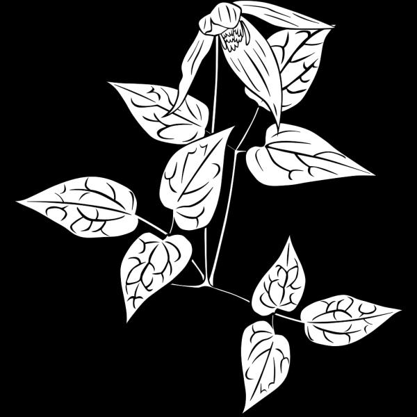 Wild Flower PNG Clip art