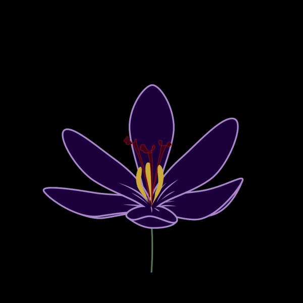Crocus Blossom PNG Clip art