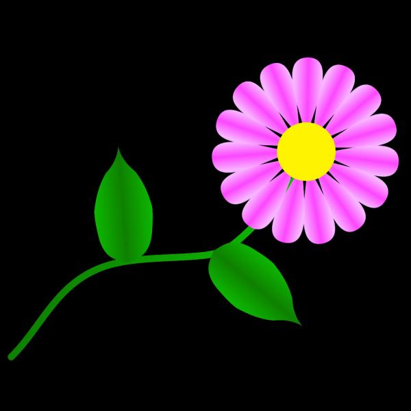 Daisy Fuchsia PNG Clip art