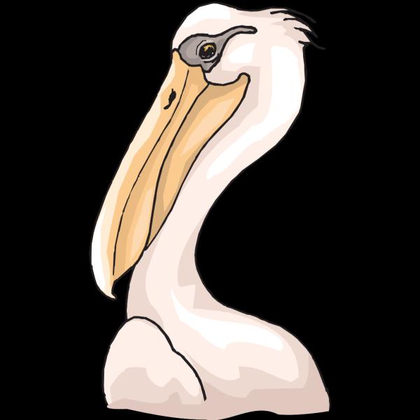 Pink Pelican Head PNG Clip art