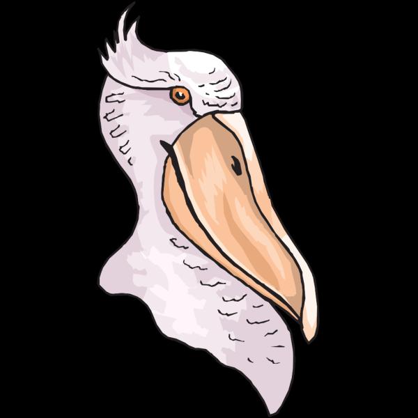 Pelican Head PNG Clip art