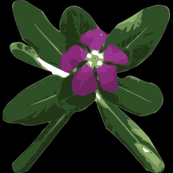 Flower 51 PNG Clip art