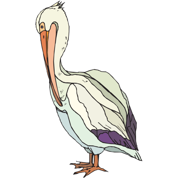 Pelican With Colorful Feathers PNG images
