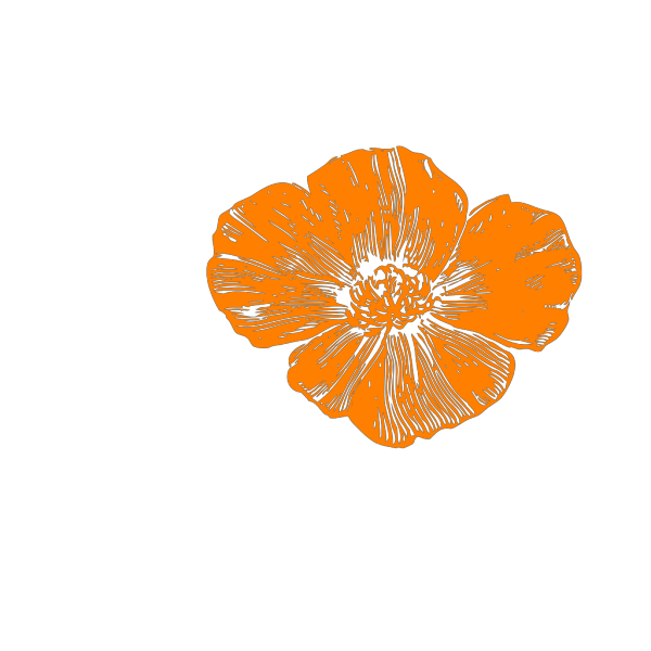 Peach Poppies PNG Clip art