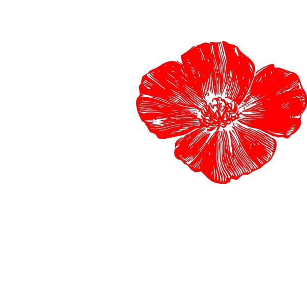 Red Poppy PNG Clip art