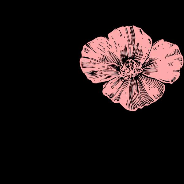 Peach Poppy PNG Clip art