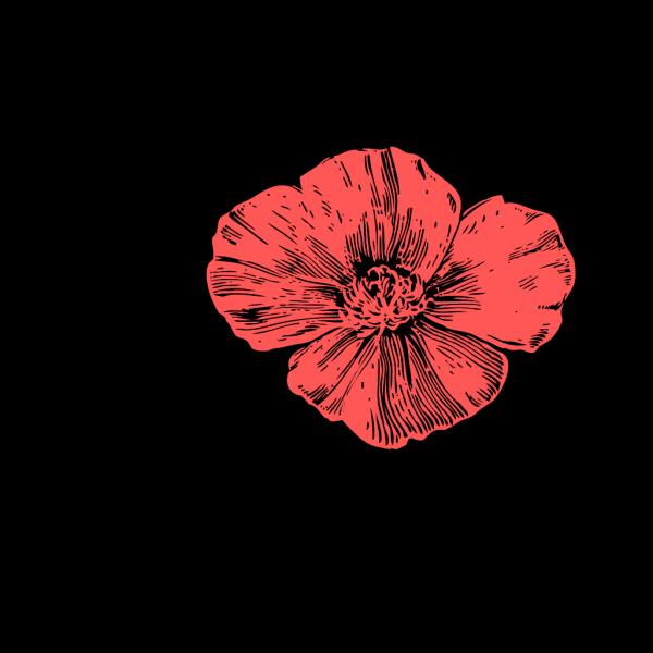 Peach Poppies PNG Clip art
