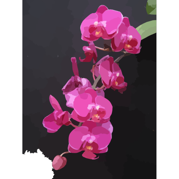 Orchid Flowers PNG Clip art