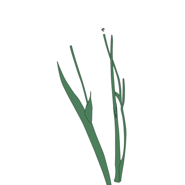 White Long Stem Flower Broke Apart PNG Clip art