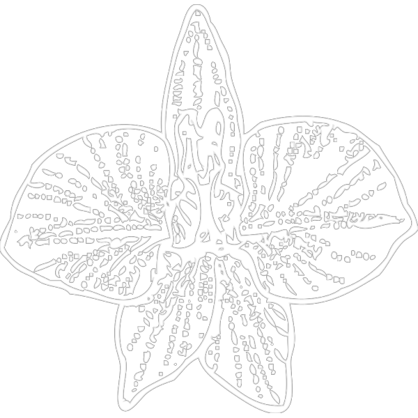 White Orchid Outline PNG Clip art