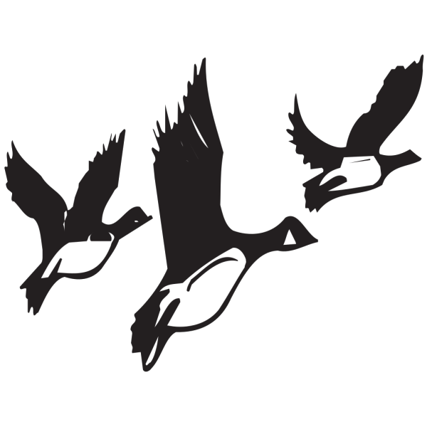 Geese Taking Off PNG Clip art