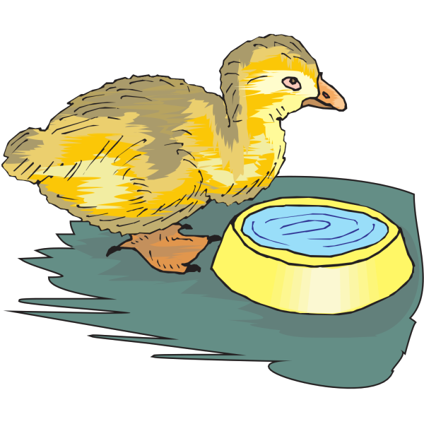 Duckling With Water Bowl PNG images