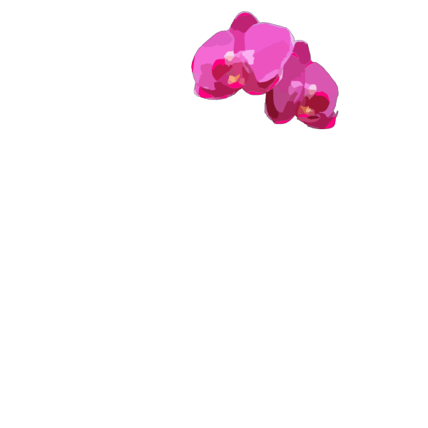 Pink Orchids PNG Clip art