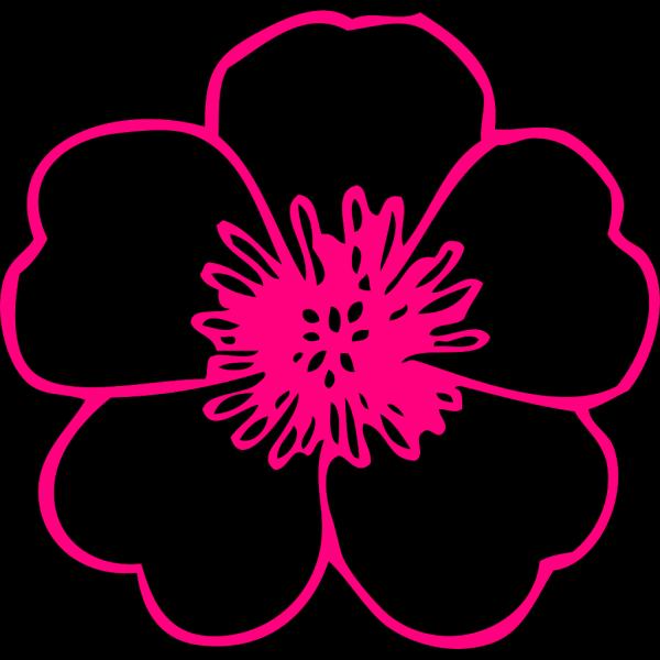 Pink Buttercup PNG Clip art