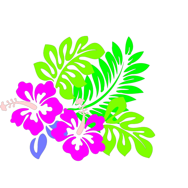 Hibiscus Hot Pink Flowers Tri Colored Green Leaves PNG Clip art