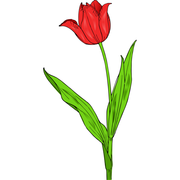 Red Tulip PNG Clip art