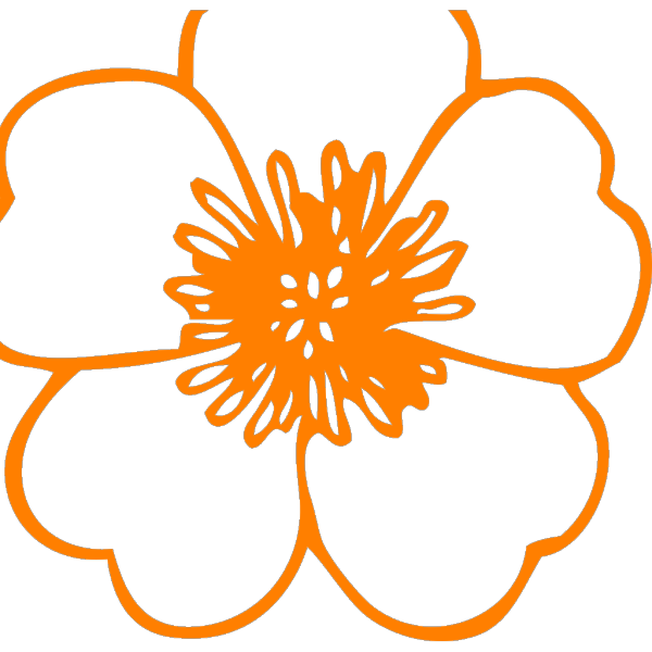 Pretty Orange PNG Clip art