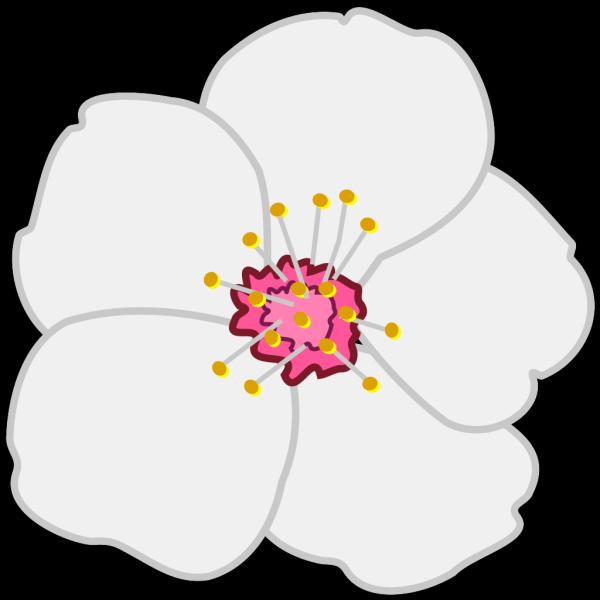 Almond Flower PNG Clip art