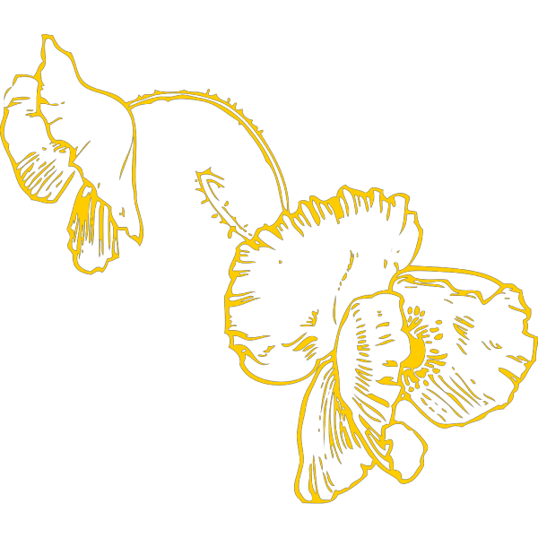 Yellow Poppy Hanging PNG Clip art