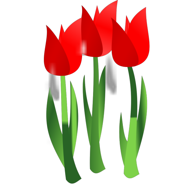Red Tulips PNG Clip art