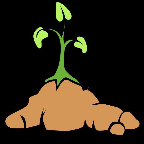 Growing Flower PNG Clip art