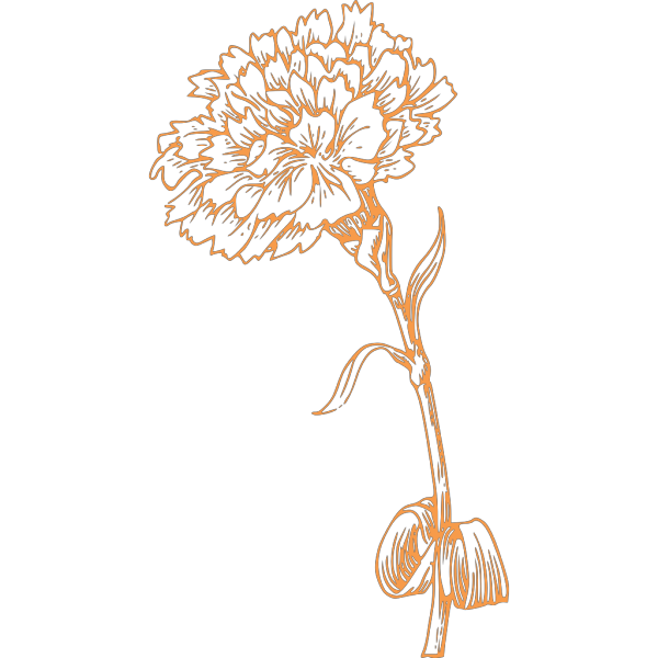 Orange Carnation PNG Clip art