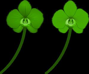 Green Orchid PNG Clip art